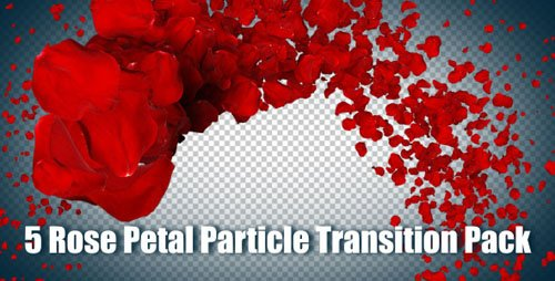 VideoHive 5 Rose Petal Particle Transition Pack (Motion Graphics)