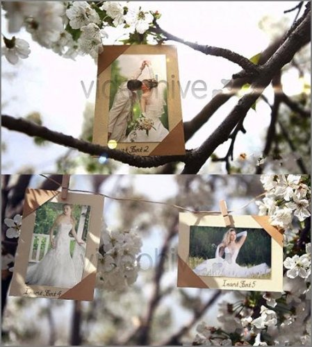 VideoHive Photos Hanging in an Orchard