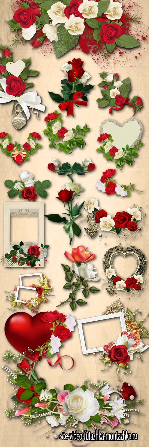 Red and White Roses, Composition with Roses PNG Files