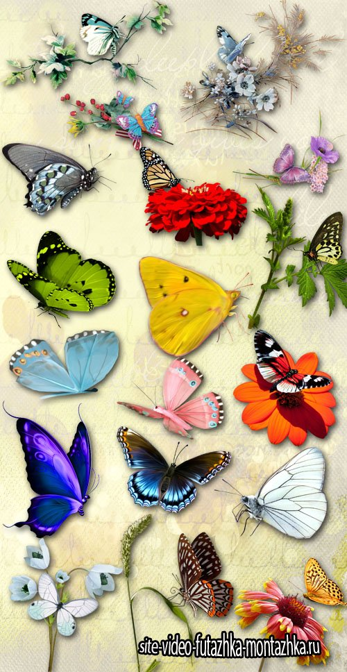 Butterflies and Flowers PNG Files