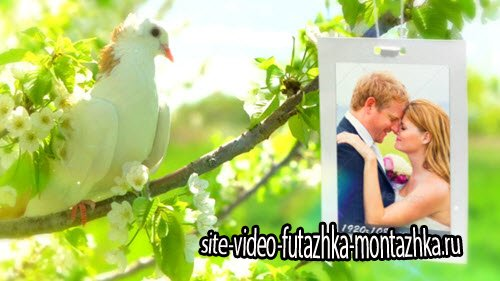 Wedding Photo Gallery - Doves Slideshow  - After Effect Project