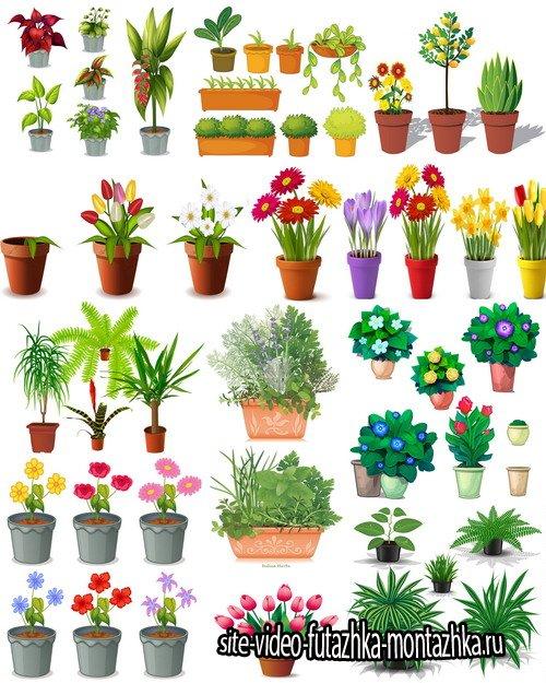 Клипарт Коллекция рисованных растений и цветов