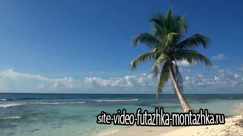 Видео футаж HD - Пальма,море,небо