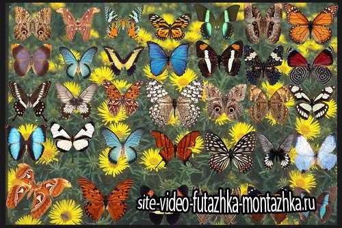 Клипарт Коллекция бабочек