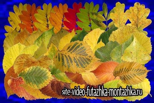 Клипарт Настоящие осенние листья - часть вторая - Рябина, осина, берёза и другие