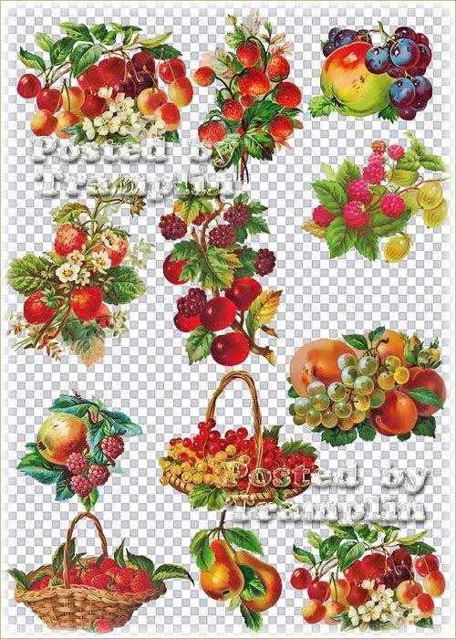 Винтажные фрукты на прозрачном фоне – Виноград, яблоки, клубника, персики, вишня