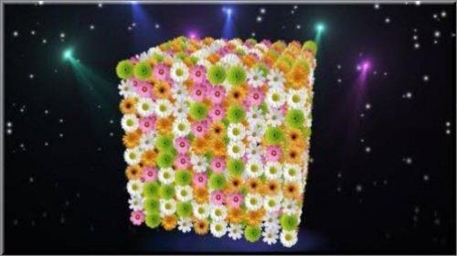 Футаж - Цветочный подарок