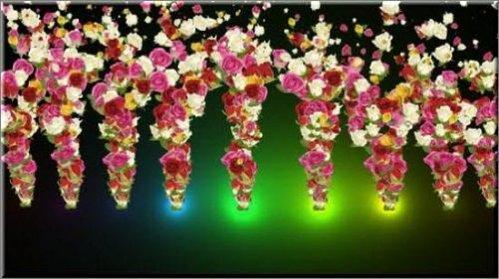 футаж Розы с альфа каналом