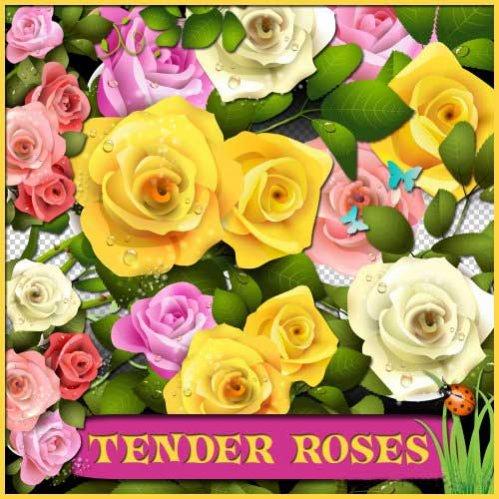 Цветочный скрап-набор - Нежные розы