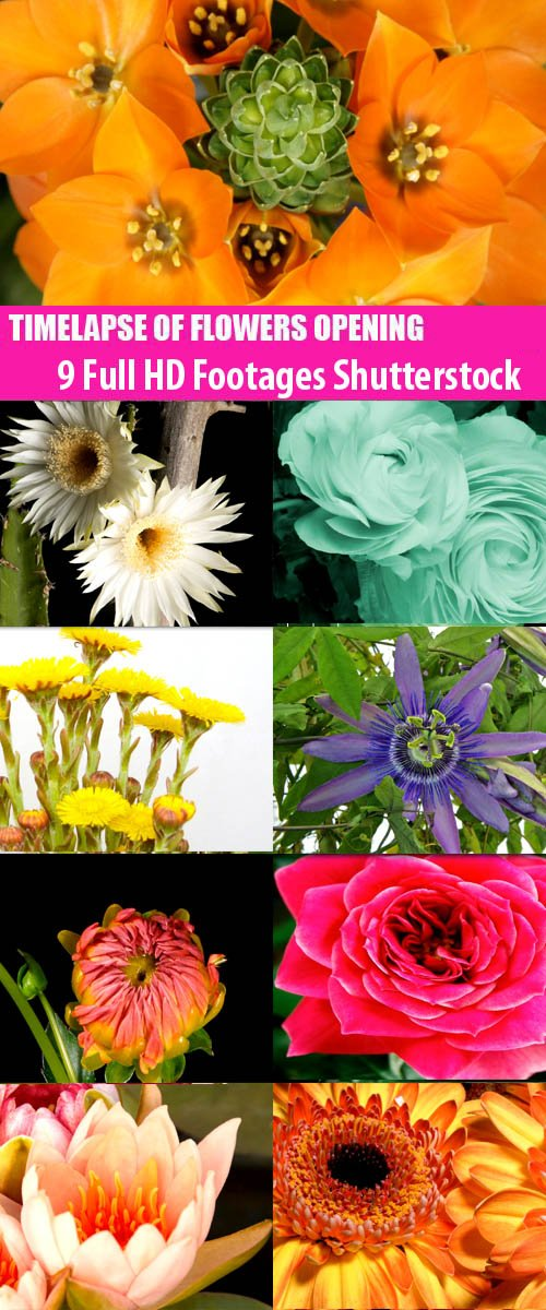 9 Full HD Footages Shutterstock - Timelapse Of Flowers Opening