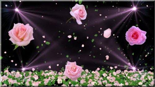 футаж - Розы судьбы