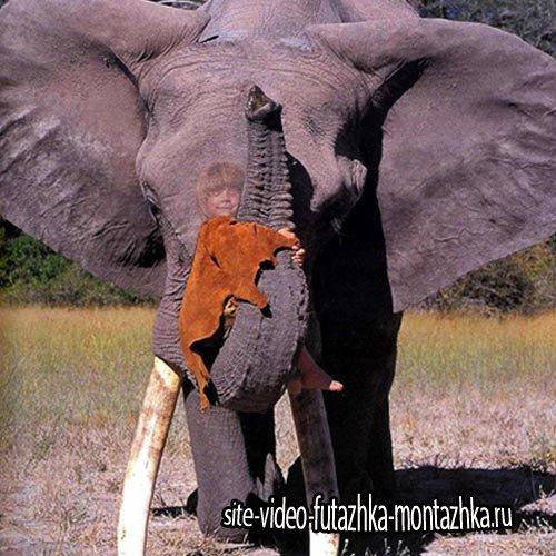 Шаблон для детей - Катание на слоне