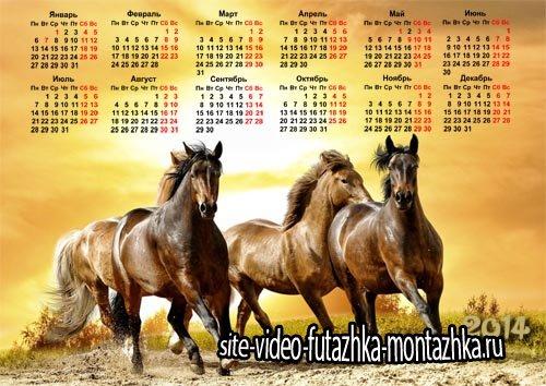 Календарь - Красивые жеребцы