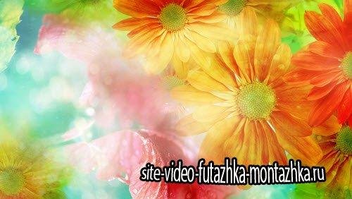 Футаж-Цветочный фон ромашки