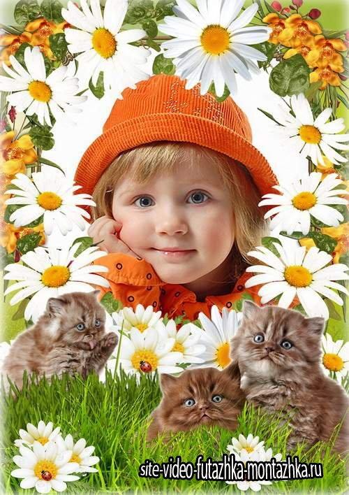 Красивая рамка для фотографии с ромашками - Мои любимые котята
