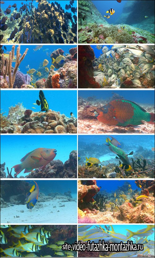 Footage Firm: Colorful Fish Underwater Stock Footage