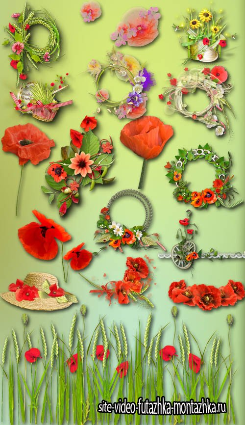 Red Poppies PNG Files