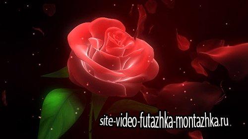 Свадебный футаж - Роза для Тебя
