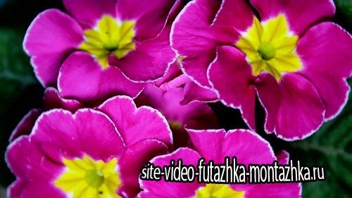 Живая природа - Красивые цветы