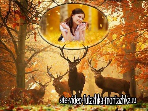 Рамка для фото - Животные в лесу