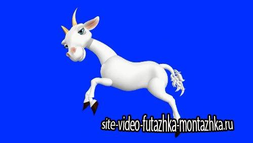 футаж - Коза на хромакее