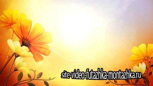 Футаж - Цветы на солнце