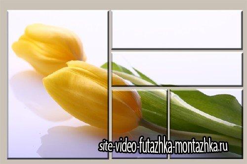 Модульная картинка из пяти частей - Желтый тюльпан