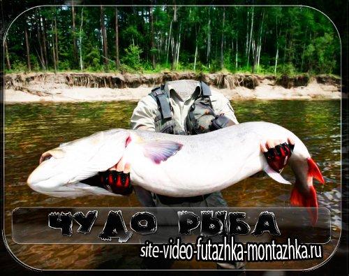 Фотошаблон для фото - Рыба моя