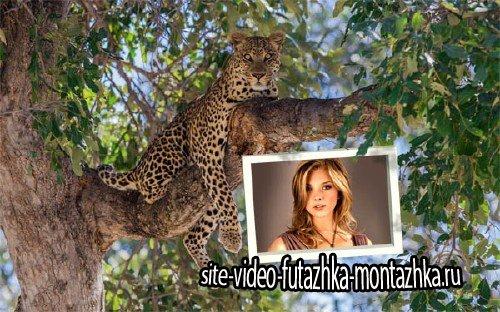 Рамка для фото - Дикий леопард на дереве