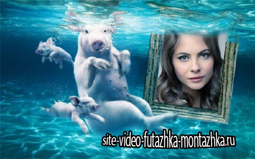 Рамка для фото - Свинки под водой
