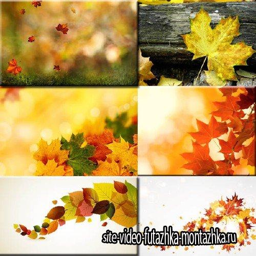 Фоны для фотографий - Листья осени