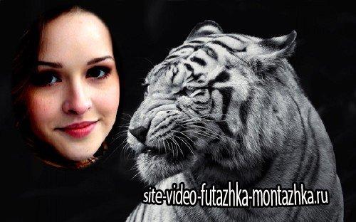 Фоторамка psd - Свирепый белый тигр