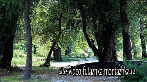 Видео футаж HD - Живая природа (в лесу)