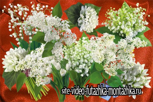 Клипарт Белые цветы весны