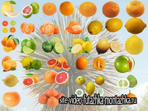 Клипарт Коллекция цитрусовых фруктов  PNG