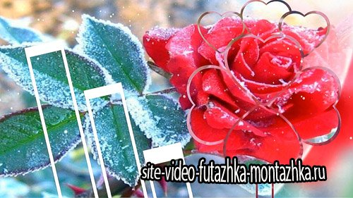 Проект для ProShow Producer - Снег на розах