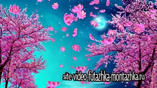 Видео Фон Праздник Весны цвет персикового дерева
