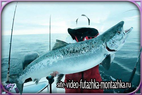Костюм для фотошопа - Огромная рыба