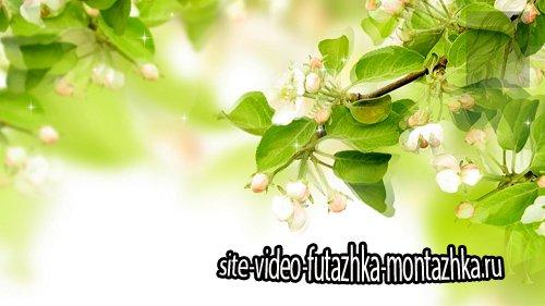 Весенние цветочные футажи для фона - часть 1