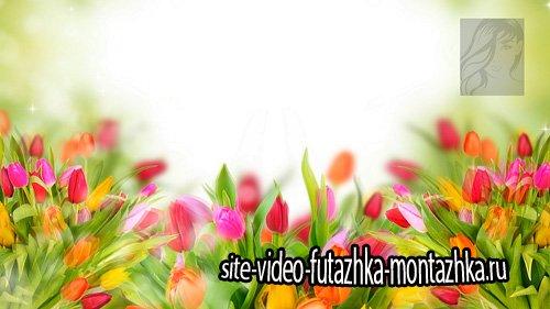 Весенние цветочные футажи для фона - часть 2