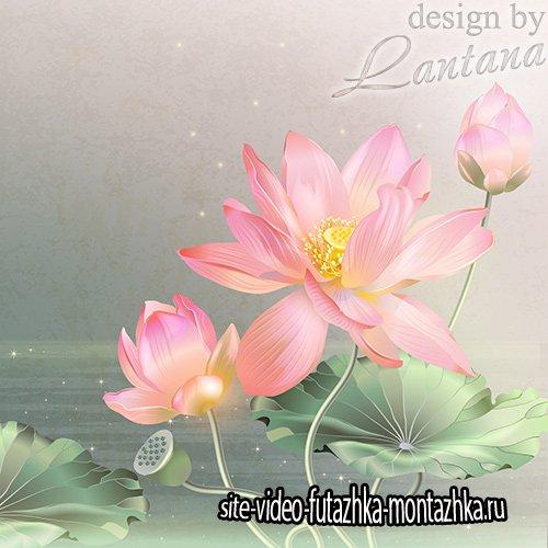PSD исходник - Нежных кувшинок цветы распускаются вместе с рассветом